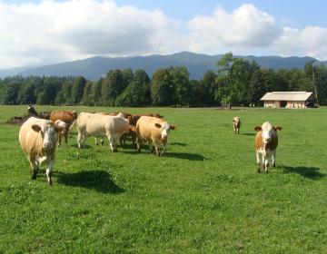 Občni zbor Zveze društev rejcev govedi lisaste pas...