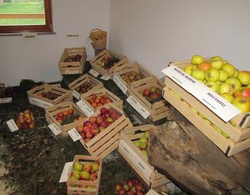 Lokalna hrana v šole
