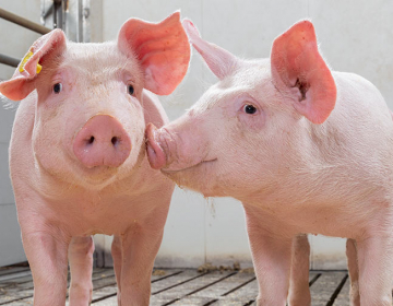 Predelava mesa kot dopolnilna dejavnost na kmetiji