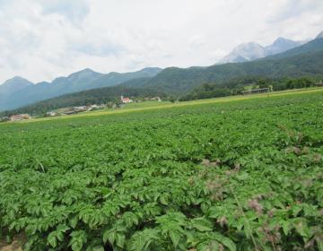 Priporočena sortna lista za krompir v letu 2021 in...