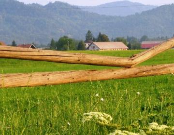 Podpora za naložbe v kmetijska gospodarstva za leto 2020